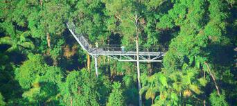 Tamborine Mountain Rainforest Skywalk Tickets Thumbnail 1