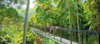 Tamborine Mountain Rainforest Skywalk Tickets Thumbnail 3