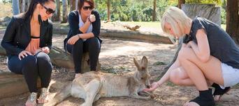 Lone Pine Koala Sanctuary with Return Scenic Cruise Thumbnail 4