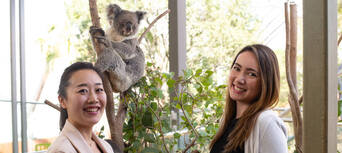Breakfast with the Koalas at WILD LIFE Sydney Zoo Thumbnail 5
