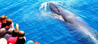 Whale and Dolphin Safari in Auckland Thumbnail 2