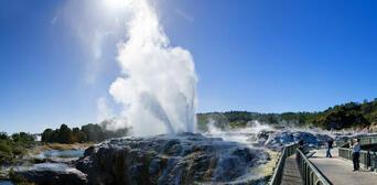 Rotorua Tour with Te Puia Rainbow Springs and Agrodome Show Thumbnail 1