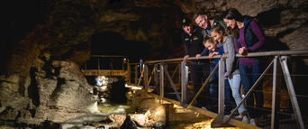 Te Anau Glowworm Caves Tour Thumbnail 5