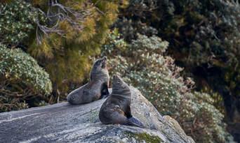 Milford Sound Overnight Cruise Thumbnail 4
