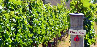 Waiheke Island Winery Day Tour Thumbnail 3