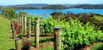 Waiheke Island Winery Day Tour Thumbnail 6