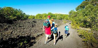 Rangitoto Island Tour from Auckland Thumbnail 4