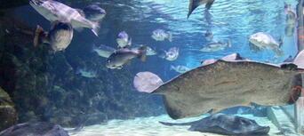 SEA LIFE Kelly Tarltons Aquarium General Admission Thumbnail 5