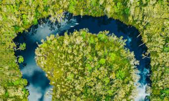 Cruise'n'Canoe Noosa Everglades Ecosafari Thumbnail 2