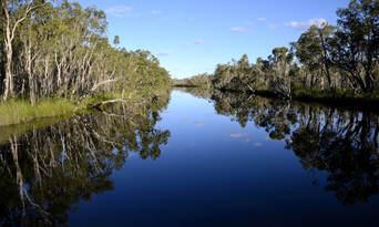 Cruise'n'Canoe Noosa Everglades Ecosafari Thumbnail 3