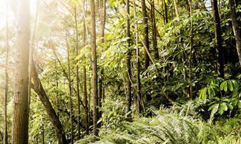 Cruise'n'Canoe Noosa Everglades Ecosafari Thumbnail 4