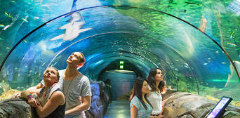 Ultimate Sydney Attractions Pass Thumbnail 4