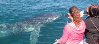 Whale Watching Jervis Bay Thumbnail 4