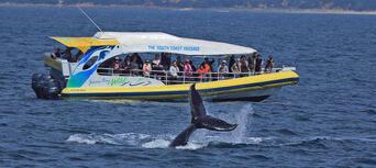 Whale Watching Jervis Bay Thumbnail 1