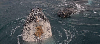 Whale Watching Jervis Bay Thumbnail 5
