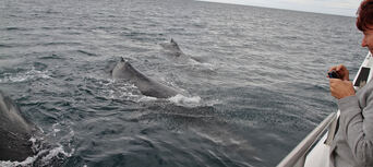 Whale Watching Jervis Bay Thumbnail 6