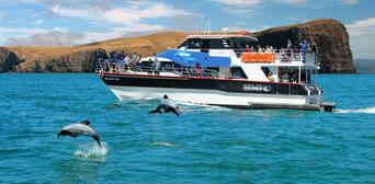Akaroa Harbour Nature Cruise Thumbnail 1