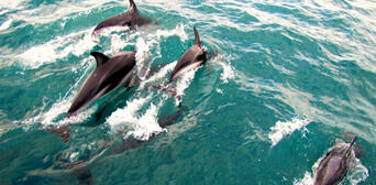Akaroa Harbour Nature Cruise Thumbnail 3