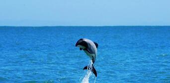 Akaroa Harbour Nature Cruise Thumbnail 6