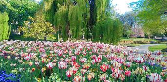 Christchurch Botanical Gardens Tour Thumbnail 3