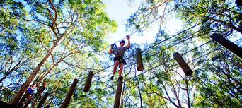 Gold Coast Hinterland Treetop Challenge Thumbnail 3