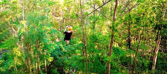 Gold Coast Hinterland Treetop Challenge Thumbnail 4