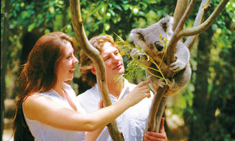 Blue Mountains and Wildlife Park Day Tour from Sydney Thumbnail 3