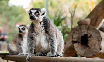 Adelaide Zoo Entry Tickets Thumbnail 5