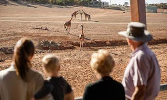 Monarto Safari Park Entry Tickets Thumbnail 1