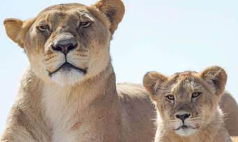 Monarto Safari Park Entry Tickets Thumbnail 4