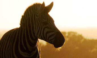 Monarto Safari Park Entry Tickets Thumbnail 6