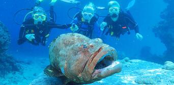 Great Barrier Reef and Kuranda Rainforest 2 Day Package Thumbnail 3