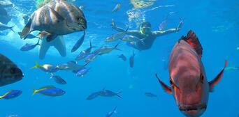 Great Barrier Reef and Kuranda Rainforest 2 Day Package Thumbnail 4
