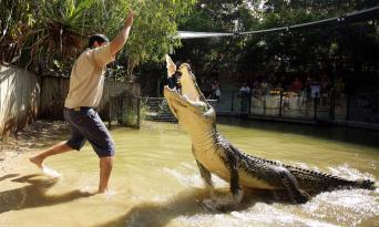 Kuranda Skyrail, Scenic Railway and Hartleys Crocodile Adventures Tour Thumbnail 4