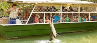 Kuranda Skyrail, Scenic Railway and Hartleys Crocodile Adventures Tour Thumbnail 5