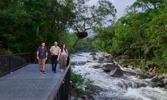 Cape Tribulation and Daintree Rainforest 4WD Day Tour Thumbnail 3