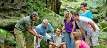 Cape Tribulation and Daintree Rainforest 4WD Day Tour Thumbnail 2