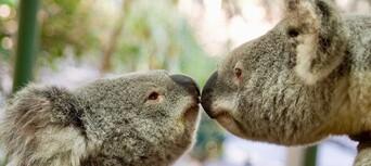 Lone Pine Koala Sanctuary Tickets Thumbnail 5