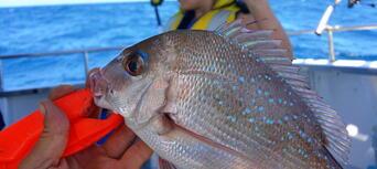 Mooloolaba Deep Sea Fishing Charter - 5 Hours Thumbnail 6