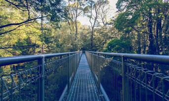 Otway Fly Treetop Walk Thumbnail 3