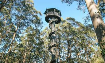 Otway Fly Treetop Walk Thumbnail 4