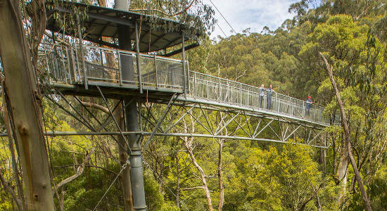 Melbourne Otway Fly Zipline Amp Treetop Walk Buy Vouchers