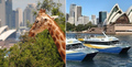 Taronga Zoo and 48hr Ferry Pass Thumbnail 1