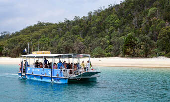 Moreton Island Dolphin and Tangalooma Wrecks Snorkelling Tour including Lunch Thumbnail 5