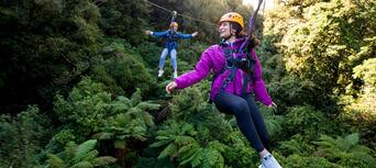 Rotorua Forest Zipline Canopy Tour Thumbnail 4