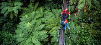 Rotorua Forest Zipline Canopy Tour Thumbnail 5