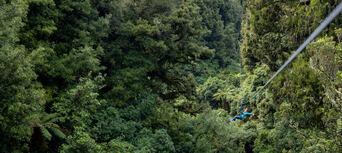 Rotorua Forest Zipline Canopy Tour Thumbnail 6
