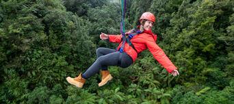 Rotorua Forest Zipline Canopy Tour Thumbnail 1