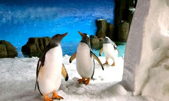 SEA LIFE Melbourne Aquarium Entry Tickets Thumbnail 3