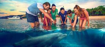 Tangalooma Dolphin Feeding Adventure Tour from Brisbane Thumbnail 1